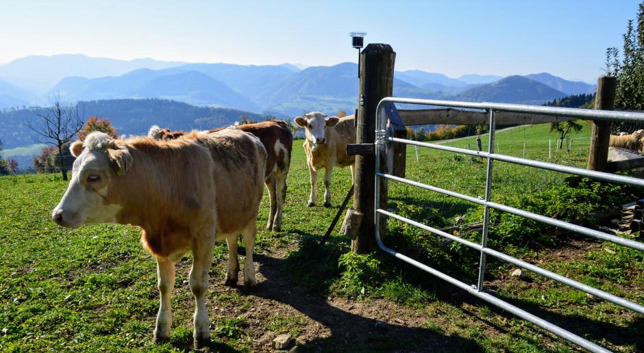Od stycznia wyższe ONW dla gospodarstw ze zwierzętami trawożernymi