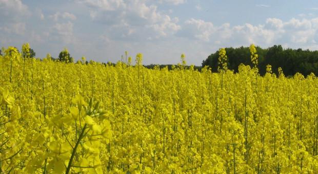 VAT a obrót produktami przetwarzania nasion roślin oleistych