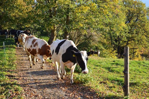 Rolnictwo ekologiczne po austriacku