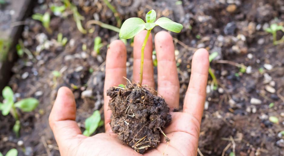 O sorpcji gleby z NaturalCrop