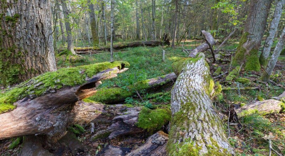 Straż: Dzięki opadom deszczu poprawiła się sytuacja pożarowa w lasach