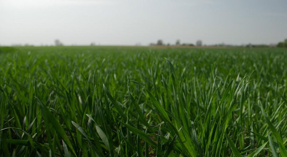 """Jaką przyjąć strategię nawożenia zbóż ozimych na wiosnę? O tym na konferencjach """"Farmera"""""""