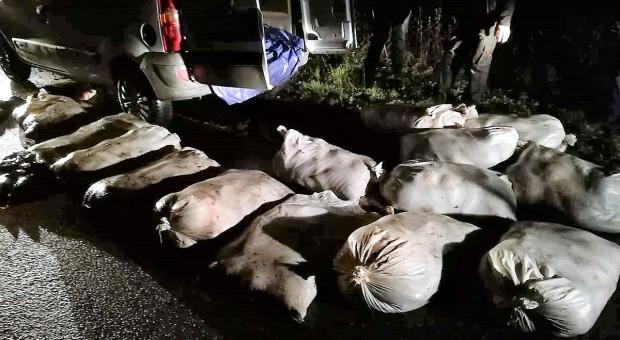 Ukradli ze stawów prawie tonę karpi