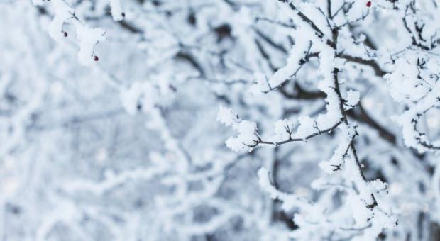 IMGW ostrzega przed silnym wiatrem i intensywnymi opadami śniegu