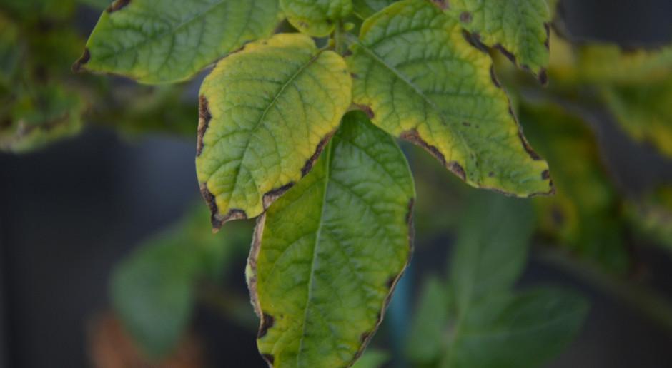 Funkcje potasu w roślinie