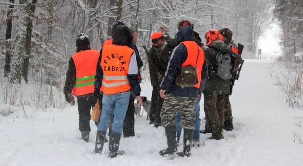 Obrońcy zwierząt nie dopuścili do polowań na dziki na Śląsku