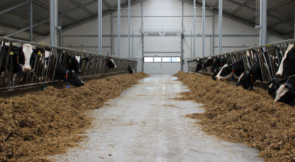 Rosja: Podaż mleka poniżej wartości docelowej