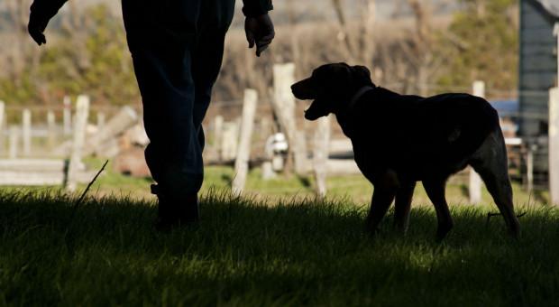 Lubelskie: 40-latek podejrzany o znęcanie się nad zwierzętami