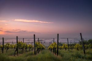 Informacja dla producentów i przedsiębiorców wyrabiający wino
