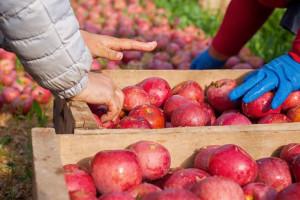 Będzie lepiej na rynku owoców i warzyw?