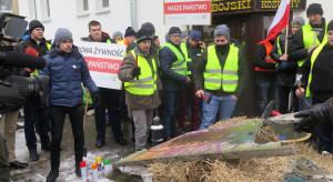 Kołodziejczak: Odstrzał dzików służy do gry politycznej i skłócenia rolników z resztą społeczeństwa