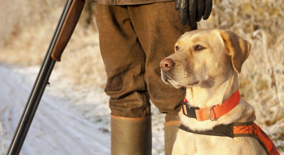 Apel o przestrzeganiu zasad bioasekuracji podczas polowań