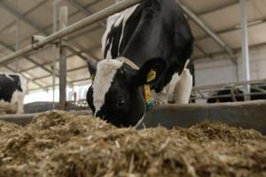 Wielu producentów żywności widzi tylko interes swojej branży