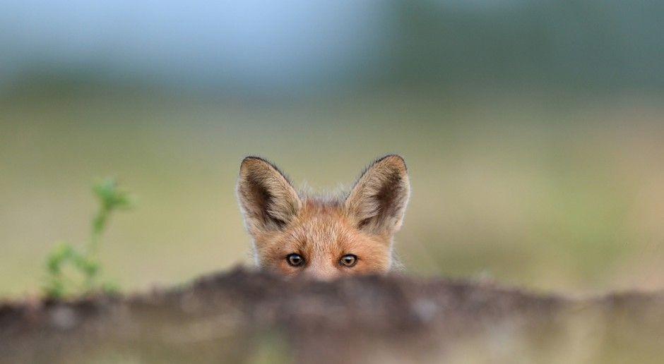 W Lasach Tynieckich powstanie ośrodek dla dzikich zwierząt