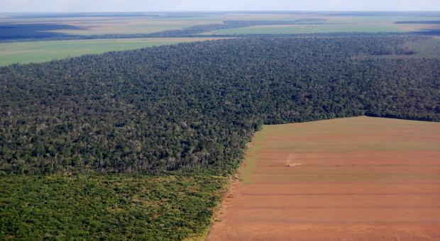 Brazylia: Rząd Bolsonaro udostępni plantatorom chronione obszary puszczy amazońskiej