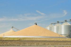Rosja planuje do roku 2024 roku zwiększyć produkcję zbóż do ponad 137 mln ton