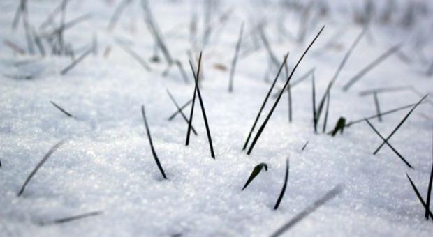 Pokrywa śnieżna – gdzie izolacja ozimin?