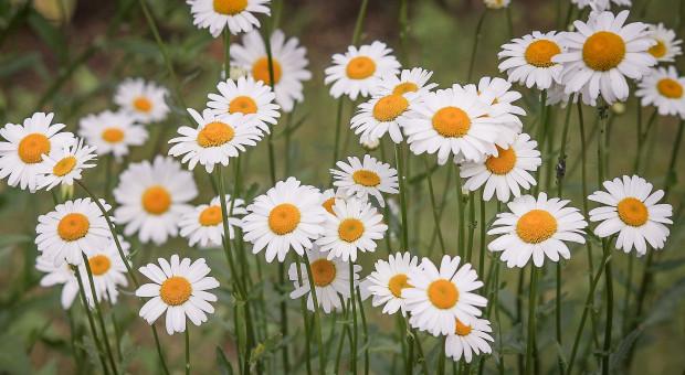 Białystok: W mieście powstaną wiosną łąki kwietne