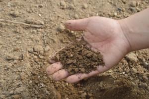 Klasyfikatorem gleby może być każdy