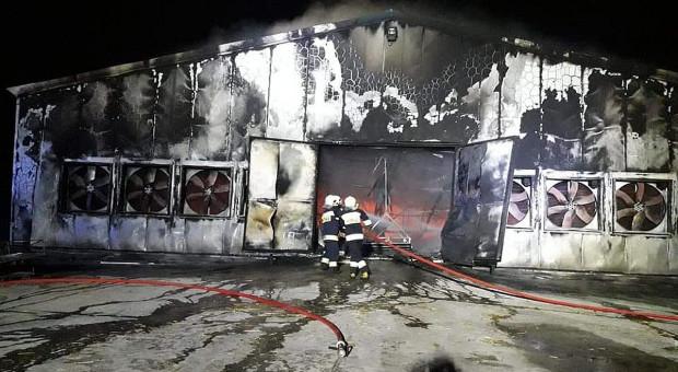 W pożarze kurnika  spłonęło kilkadziesiąt tysięcy kurczaków