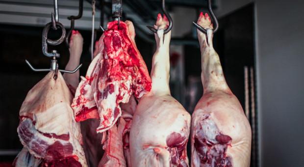 Notowania rynku wieprzowiny: Ceny tuczników ponownie spadły