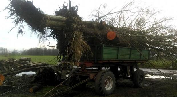 Ukradł drzewa razem z korzeniami