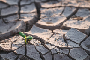 Najgorsze skutki suszy – na północy woj. lubelskiego