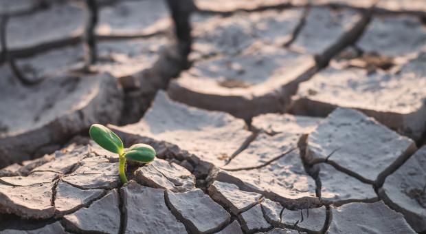 Kandydat Wiosny apeluje o debatę na temat rolnictwa