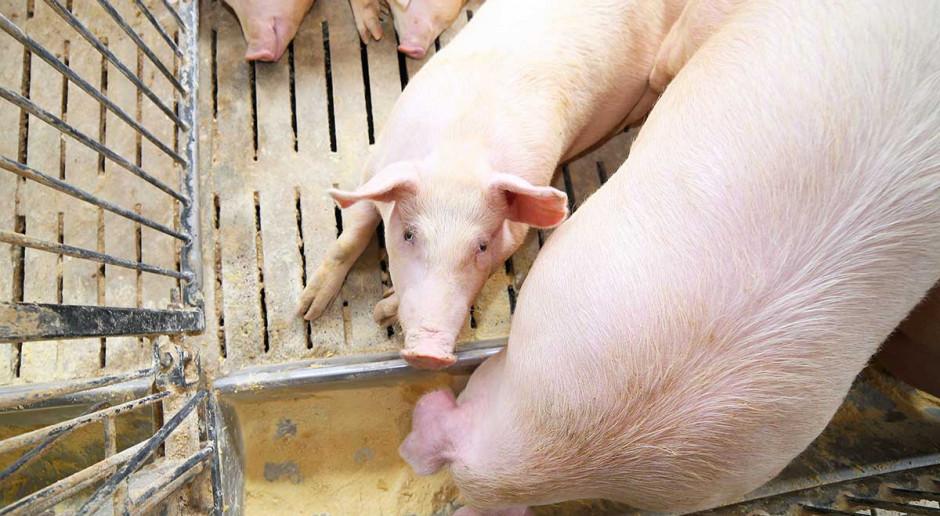 Kontrole importowanego mięsa - czy są wystarczające?