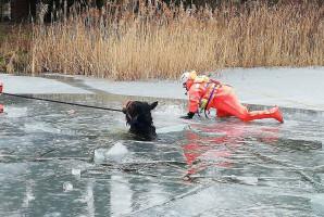 Strażacy nie dopuścili, by koń utonął pod lodem
