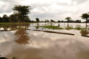 Australia: Setki tysięcy zwierząt utonęło w czasie powodzi