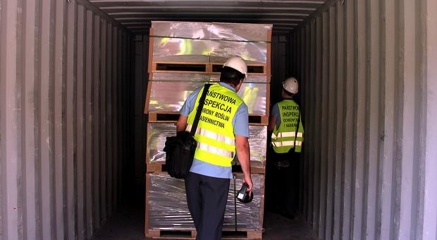 Groźny szkodnik wykryty przez PIORiN w skrzyniach importowanych z Chin