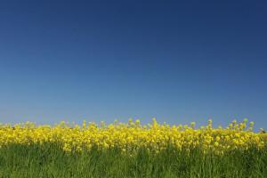 Białoruś znacznie zwiększyła produkcję oleju roślinnego w 2018 r.
