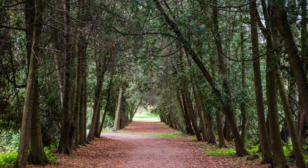 Podkarpackie: Leśnicy rekomendują pół tysiąca drzew na pomniki przyrody