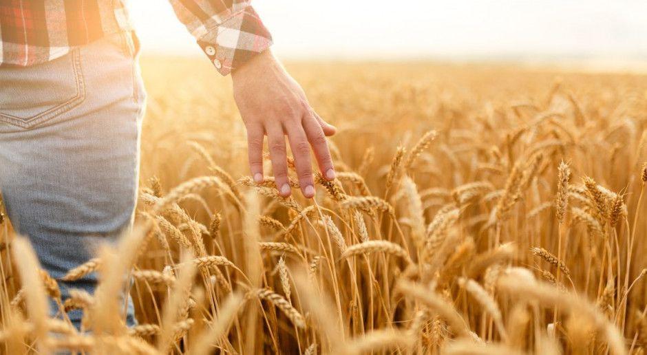 Delikatne spadki cen zbóż – magazyny pełne
