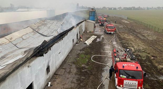 W pożarze fermy spłonęło kilkadziesiąt tysięcy kurczaków