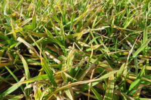 Test na porażenie roślin chorobami – wykonaj go samodzielnie