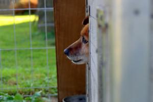 Odebrać prawo odbierania zwierząt amatorom - niszczenie gospodarstw to nie ochrona zwierząt!