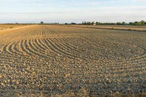Jak rozwiązać problemy polskiego rolnictwa?