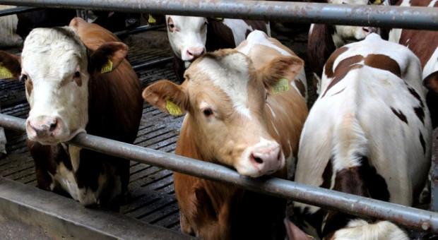 KE przypomina w związku kontrolą polskiego mięsa przez Czechy o proporcjonalności