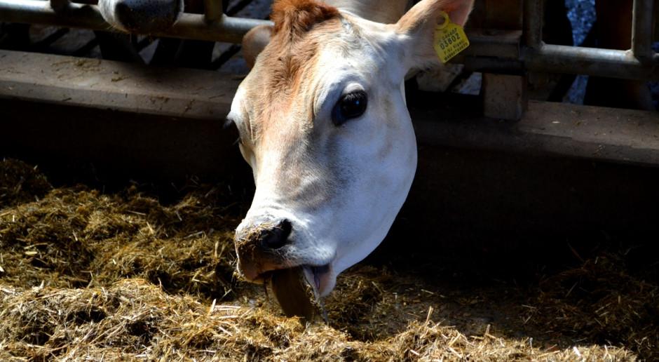 Jak wycisnąć więcej mleka z pasz objętościowych?