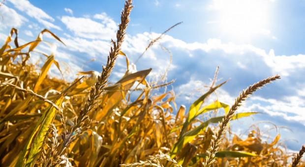 Concordia: Pilotażowe ubezpieczenia od ryzyka suszy
