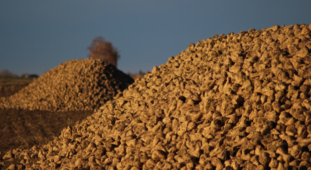 Grupa Südzucker AG podjęła decyzję o zamknięciu pięciu cukrowni