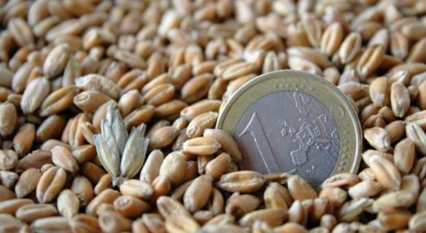 Pszenica w skupach tanieje – cena nierzadko poniżej 800 zł/t