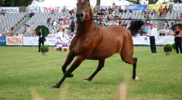 Ardanowski: sytuacja stadnin koni w Polsce jest stabilna