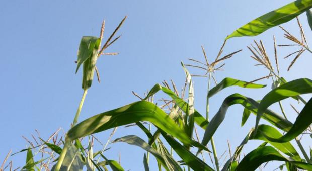 Vademecum uprawy i ochrony kukurydzy