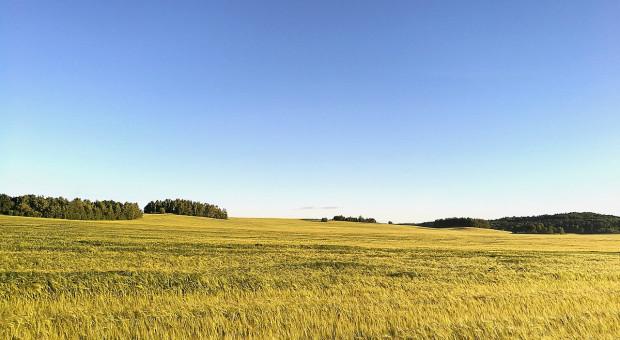 W 2019 r. Białoruś oczekuje 9 mln ton zbóż