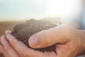 Podnieść żyzność - mikroorganizmy glebowe