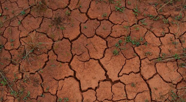 Ilu rolników dostaje pełną pomoc po suszy?