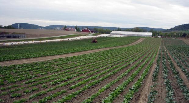 Nowy fungicyd i herbicyd od BASF